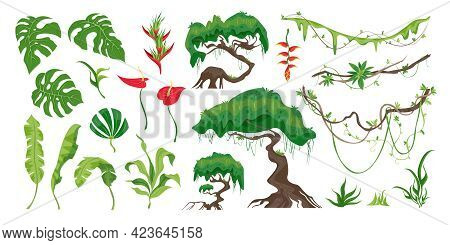 Set Of Jungle Plants Trees Ferns Creepers Flowers And Other Rainforest Details Flat Vector Illustrat