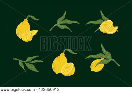 A Set Of Citrus Fruits With Leaves. Illustrations Of Lemon, Lime, Slices And Half Of Fruit. Cute Cit