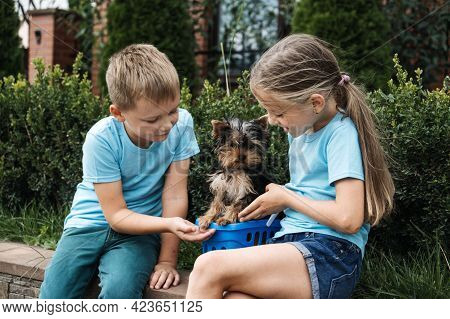 Puppies And Children, Introducing Puppies And Kids. Yorkshire Terrier Puppy And Three Kids Playing T