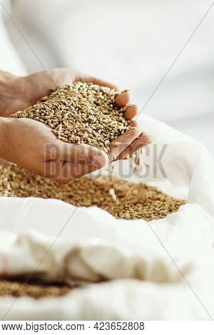 Close-up Shot Of Hands Of Master Brewer With Barley. Employee Inspects Seeds At Brewery