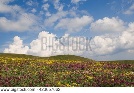 View Of Wonderful Flowering Mountain Meadow In Umbria During Spring Season