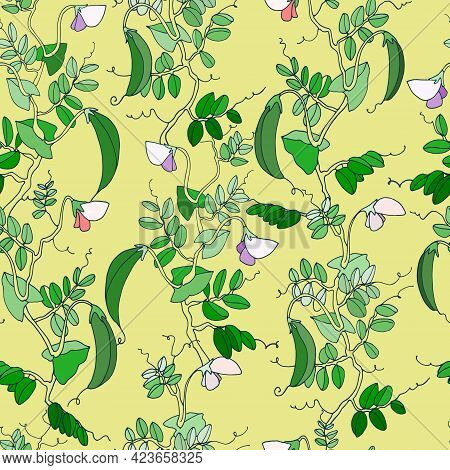 Seamless Pattern. Pea Plant With Pods And Flowers. Vector Illustration On Pale Yellow Background