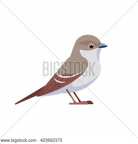 Gray Flycatcher Is A Small, Insectivorous Passerine In The Tyrant Flycatcher Family. Passerine Bird