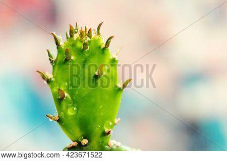 Green Prickly Cactus, Beautiful Exotic Prickly Plant, Cactus Drops
