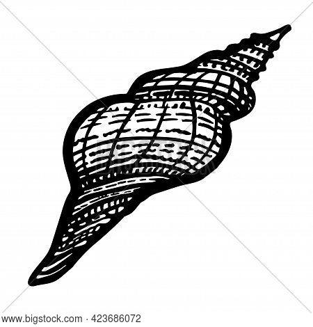 Curled Marine Seashell Of Freehand Black Ink Line Isolated On White. Amazing Inhabitant Of The Seabe