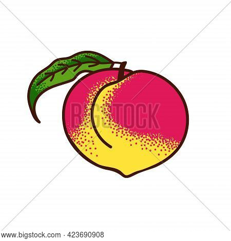 Ripe Peach With A Leaf. Vector Doodle Illustration On White Background.