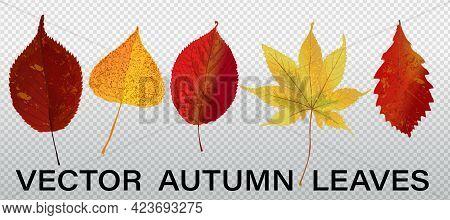 Isolated Leaves Vector Set. Autumn Nature Decor. Autumn Leaves Falling Graphic Design. Fall Season S