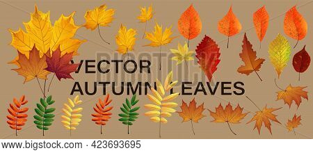 Autumn Nature Decor. Autumn Leaves Falling Graphic Design. Fall Season Specific Vector Background.