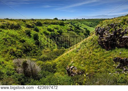 Spring blooming Golan Heights - a mountain plateau of volcanic origin. Holiday. Jewish Easter in Israel. The concept of ecological, active and photo tourism