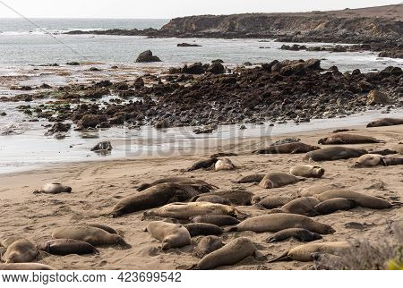 San Simeon, Ca, Usa - February 12, 2014: Elephant Seal Vista Point. View On Ddark Brown Rocky Coastl
