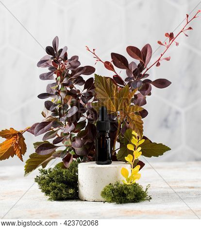 Skin Serum In A Brown Dropper On A Catwalk Surrounded By Plants And Moss. Eco Cosmetics. Copy Space.