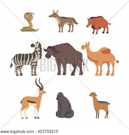 Collection Of African Animal, Buffalo, Zebra, Camel, Cobra Snake, Gorilla Wild Predator And Herbivor