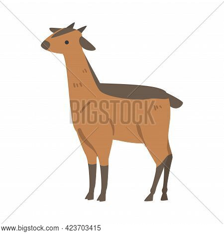 Cute Canna African Animal, Antelope Wild Herbivore Jungle Animal Cartoon Vector Illustration
