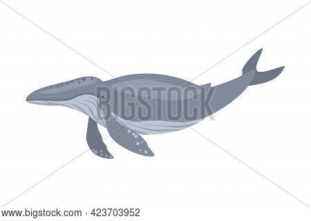 Whale Sea Arctic Animal, Wild Polar Marine Mammal Cartoon Vector Illustration