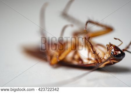 Cockroach On White Background, Insect Cockroaches Dead On Floor In Home Get Rid Cockroach Bug Concep