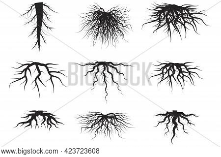 Black Roots Set On White Background. Spring Season. Floral Background Set. Floral Branch. Vector Ill