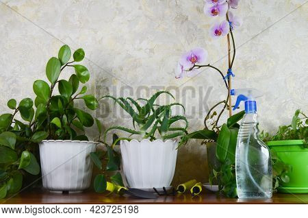 Succulent House Plants In A Pots, Gardening Tool For The Care Of Houseplants, Sustainable Summer And