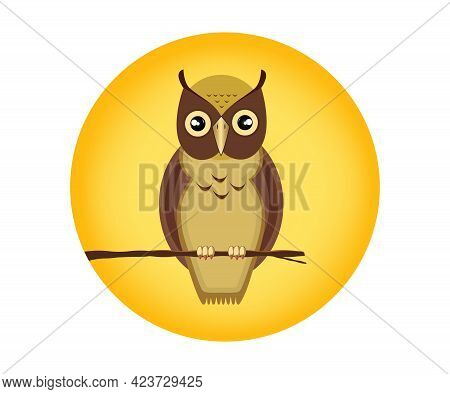 An Owl Is A Nocturnal Bird Of Prey With Large Forward-facing Eyes Surrounded By Facial Disks, A Hook