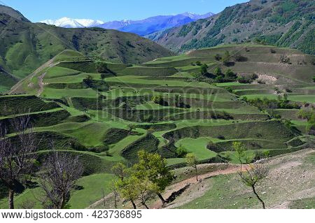 Fantastic Landscape With Mountain Terraces Of Green Pastures In Dagestan, Russia