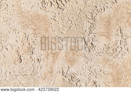 Shelly Limestone. Panel Of Highly Fossiliferous Limestone, Composed Of A Number Of Fossilized Organi