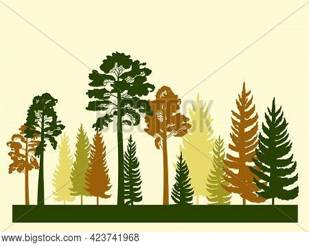 Forest Silhouette. Landscape With Coniferous Trees. Beautiful View. Pine And Spruce Trees. Summer Na