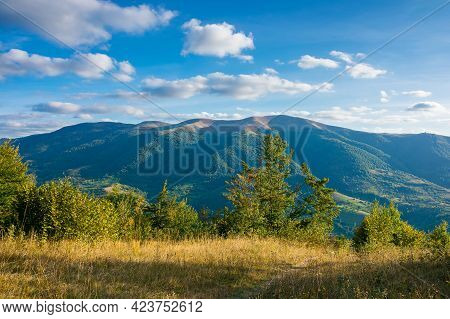 Mountainous Countryside Landscape In Autumn. Trees On The Meadow In Evening Light. View In To The Di