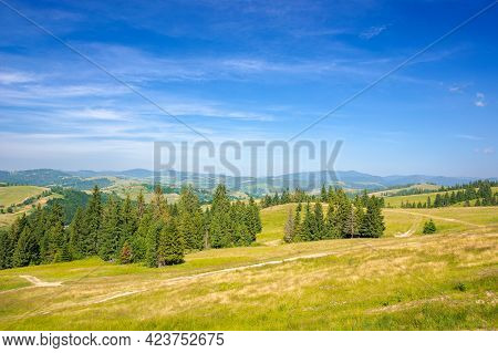Trees On The Hill. View In To The Distant Rural Valley. Blue Sky With Clouds In Evening Light