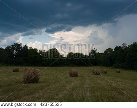 Rural Landscape With Hay Stacks, Field With Roll Bales Near Forest, Domestic Livestock Fodder During