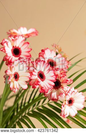 Close-up Of A Bouquet Of Red Gerberas In A Vase On A Beige Background. A Vertical Photo Is Ideal For