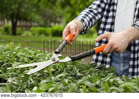 Worker Cutting Bush With Hedge Shears Outdoors, Closeup. Gardening Tool