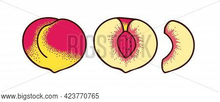 Whole Peach And Two Types Of Slices Isolated On White. Half And Slice Of Peach. Vector Illustration