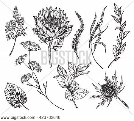 Vector Set Of Black And White Flowers, Feverweeds, Protea, Herbs And Leaves Isolated On White Backgr