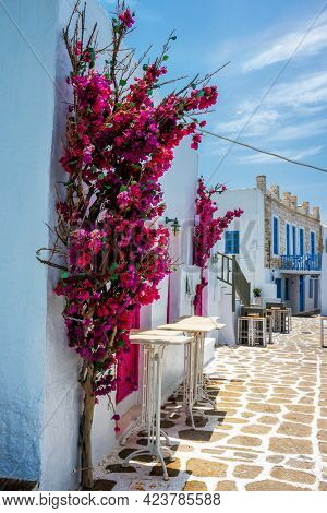 Picturesque narrow street with traditional whitewashed houses with blooming flowers of Naousa town in famous tourist attraction Paros island, Greece