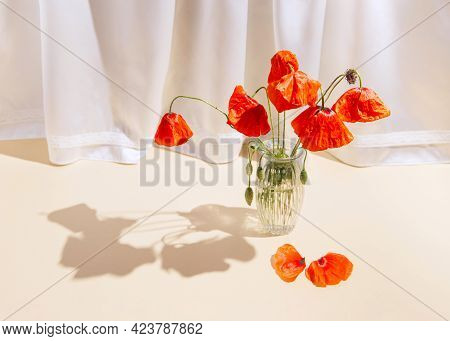 Red Poppies Flowers In Glass Vases On Pastel Sunlit Background With White Silk Curtain. Nature Conce