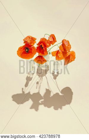 Red Poppies Flowers In Glass Vases On Pastel Sunlit Background With Shadows. Nature Concept. Minimal
