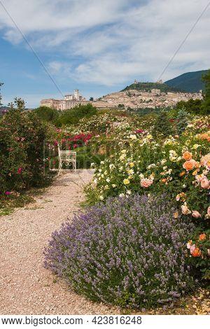 Pathway In The Magic Rose Garden Of Assisi In Umbria