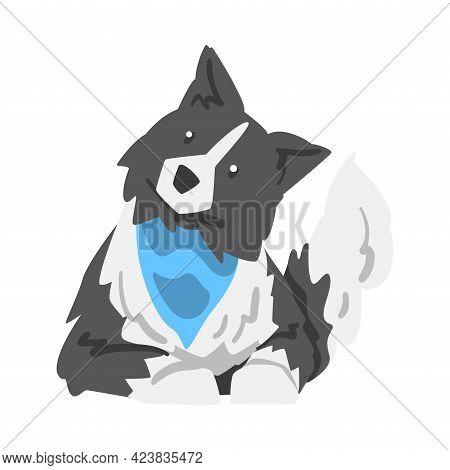 Border Collie Dog In Blue Neckerchief, Smart Shepherd Pet Animal With Black White Coat Cartoon Vecto
