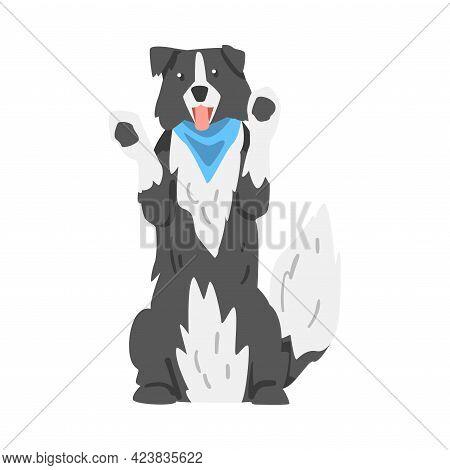 Border Collie Dog Standing On Its Hind Legs, Smart Shepherd Pet Animal With Black White Coat Cartoon