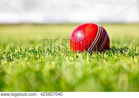 Cricket ball on green grass of cricket ground close up background