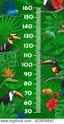 Kids Height Chart With Cartoon Toucan Birds And Chameleons In Jungle Tropical Leaves. Vector Growth