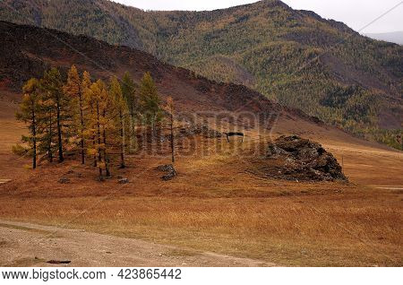 Low Hills Overgrown With Rare Larch Trees In An Autumn Valley Surrounded By Mountains.