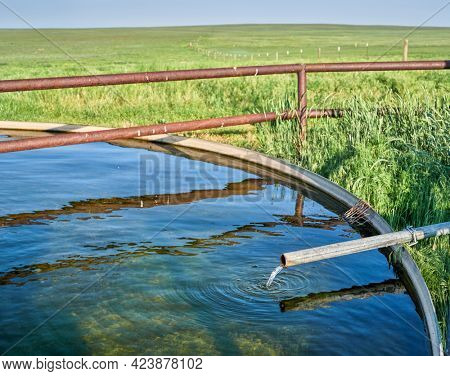 cattle water tank with water coming from windmill pump in a green prairie - Pawnee National Grassland in northern Colorado