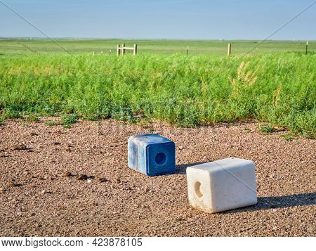 salt blocks with trace minerals for cattle (blue one with cobalt and iodine) in green prairie in Colorado - Pawnee National Grassland in early summer