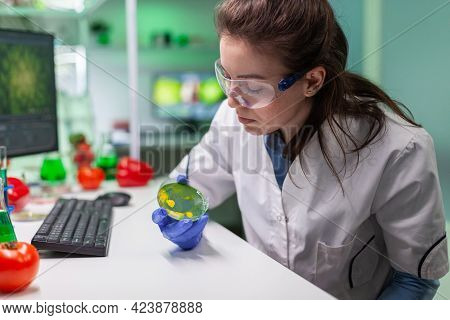 Pharmaceutical Researcher Analyzing Solution Test From Petri Dish For Developing Medical Expertise.
