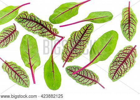 Fresh Beetroot And Chard Leaves Isolated On White Background. Pattern. Creative Layout. Salad Leaf