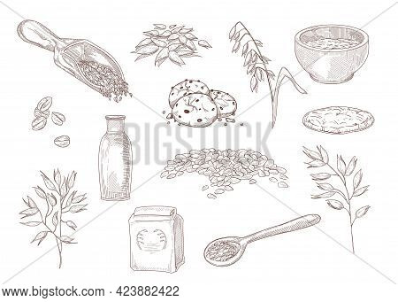 Hand Drawn Vintage Sketch Of Ways Of Using Oats. Bowl Of Oatmeal, Cereal, Cookies, Grains In Scoop,