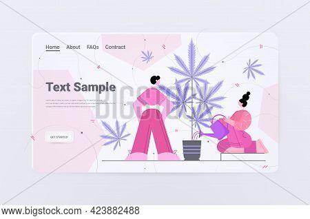 People Using Cbd Hemp Oil Extracted From Cannabis Plant Using Marijuana For Medicinal Purposes Pharm