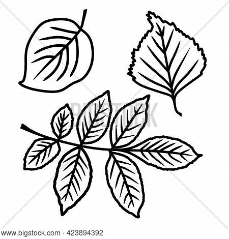 A Set Of Leaves In A Vector Isolated On A White Background In The Doodle Style. Ash, Apple, And Birc