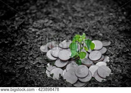 Growth Small Tree On Thai Stack Coin 5 Baht With Black And White Backgroune. Problem Finance Or Star