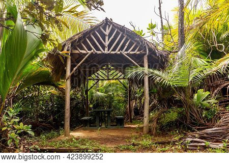 Wooden Shelter With Thatched Roof Made Of Palm Leaves In Tropical Rainforest On Glacis Noire Nature